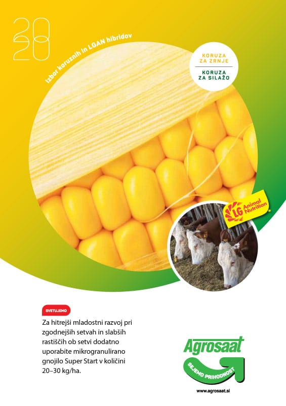 agrosaat-izbor-koruznih-lgan-hibridov-2020